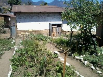 Huertos son creados en las casas donde las ancianas enseñan los secretos naturales