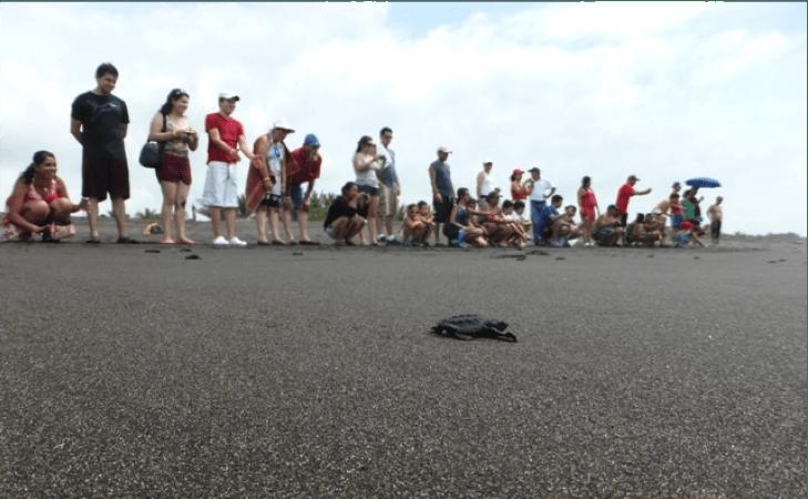 liberacion de tortugas1 - Guía Turística - Liberación de Tortugas