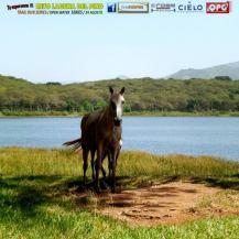 guateventos laguna del pino - Guía Turística - Laguna del Pino