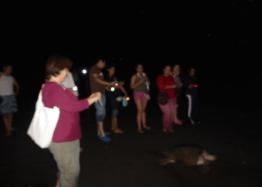 Serán momentos especiales cuando puedas apreciar por primera vez una tortuga en su hábitat.