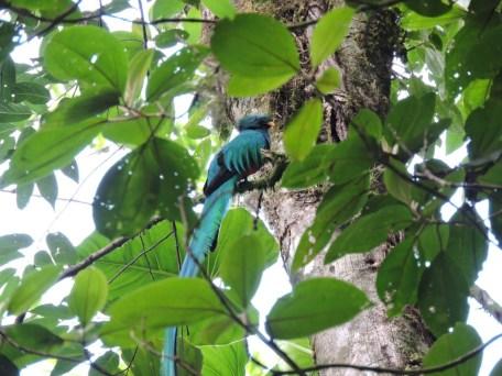 El Quetzal María Rosa Reyes Galicia 1024x768 - Guía Turística a Refugio del Quetzal, San Marcos