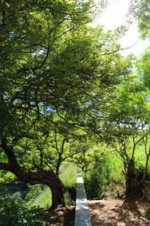Vegetación 683x1024 - Guía Turística - Laguna del Hoyo, Jalapa