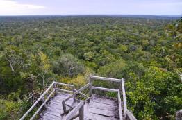 Vista desde La Danta El Mirador Peten foto por Rony Rodriguez de  - Galeria de Fotos de Guatemala por Rony Rodriguez