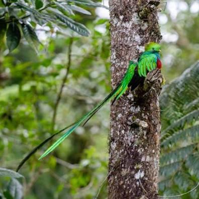 El Quetzal - foto por Luis Búrbano