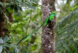 el quetzal foto por luis burbano - Galeria de Fotos de Guatemala por Luis Búrbano