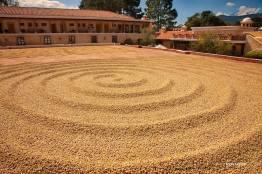 secado de cafe en la finca filadelfia la antigua guatemala foto por edgar monzon - Galeria de Fotos de Guatemala por Edgar Monzón