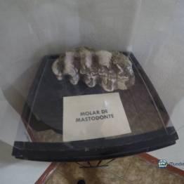 Un molar en promedio pesa entre 10 a 15 libras