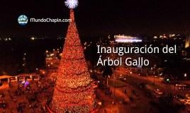 Inauguración del Árbol Gallo