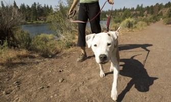 Actividad con Perros Mascotas en el Pacaya