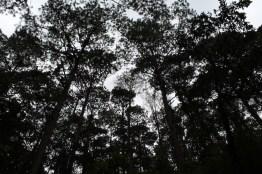 img 7099 - Parque Ecológico Kanajuyú, un lugar para disfrutar dentro de la ciudad