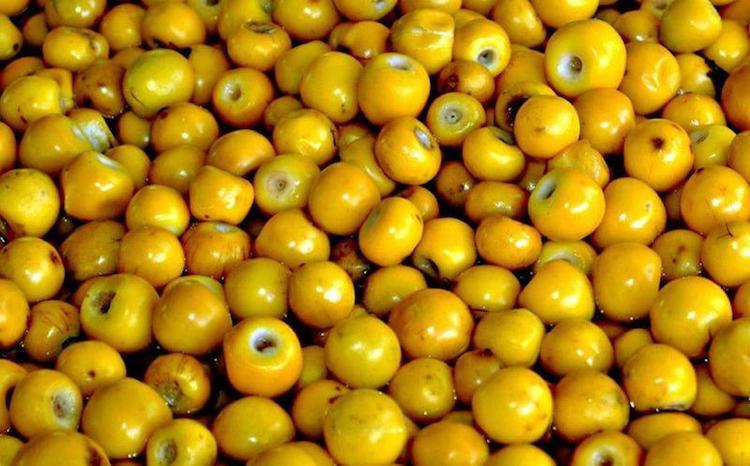 0611167dc7bafbb - 10 Frutos nativos de Guatemala