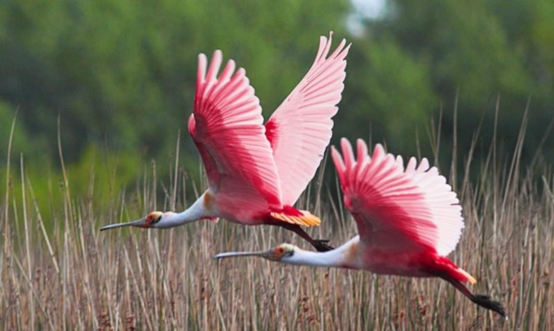 10 Tipos de Aves en Guatemala