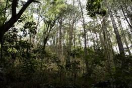img 8911 26 - Conoce el parque ecológico de Guatemala reconocido en Italia