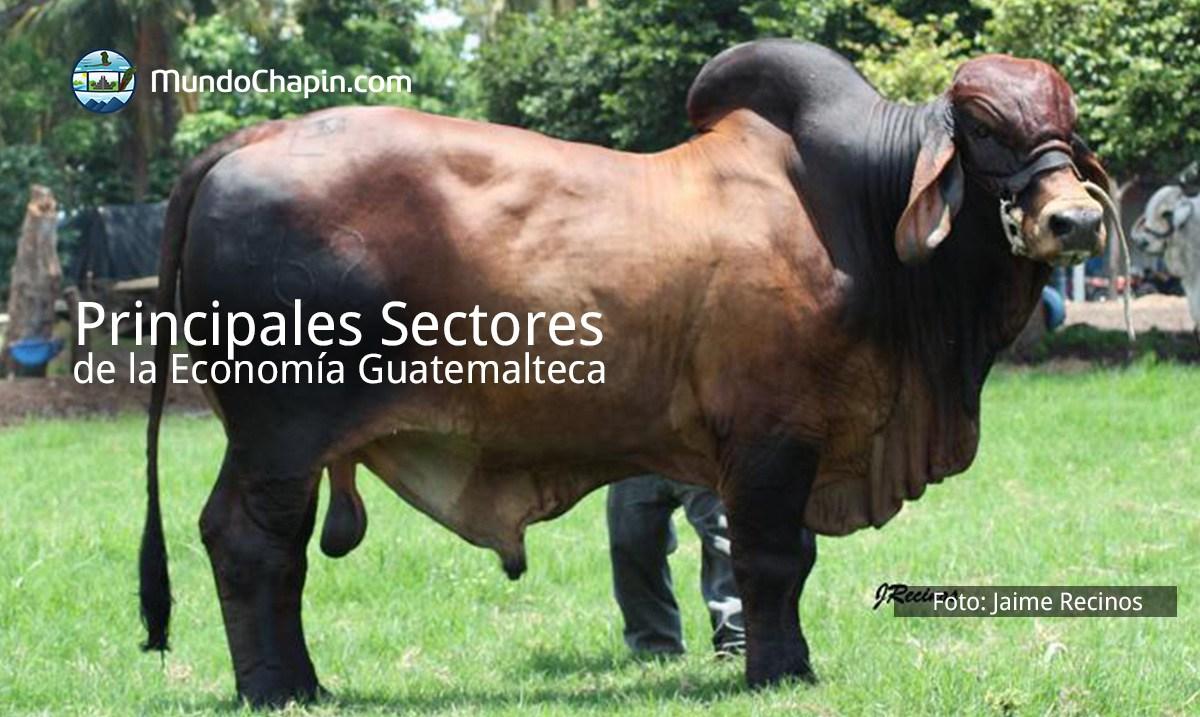 principales sectores de la economia guatemalteca mundochapin 1 - La Convención para Contratos de Compraventa Internacional entra en vigor