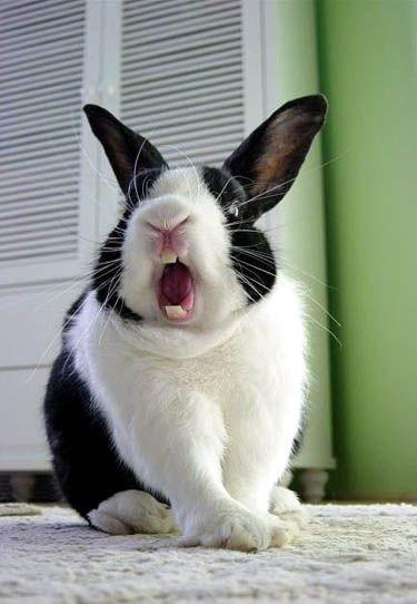 Causas por las que tu conejo te puede morder. C