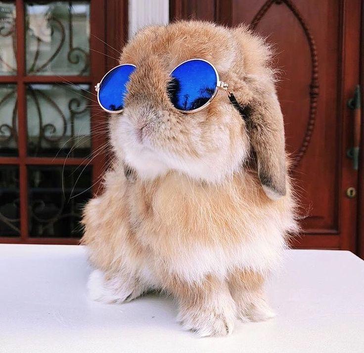 Cuidado de conejos en épocas de mucho calor. Conejo con gafas de sol