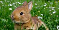 que saber para salir a pasear con mi conejo
