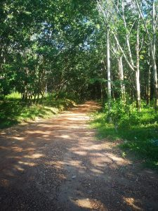 isan photos small road to rubber farm