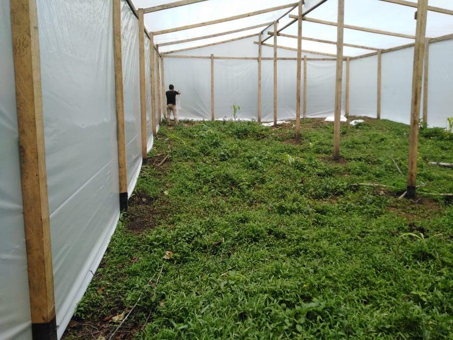 inside the greenhouse chajul