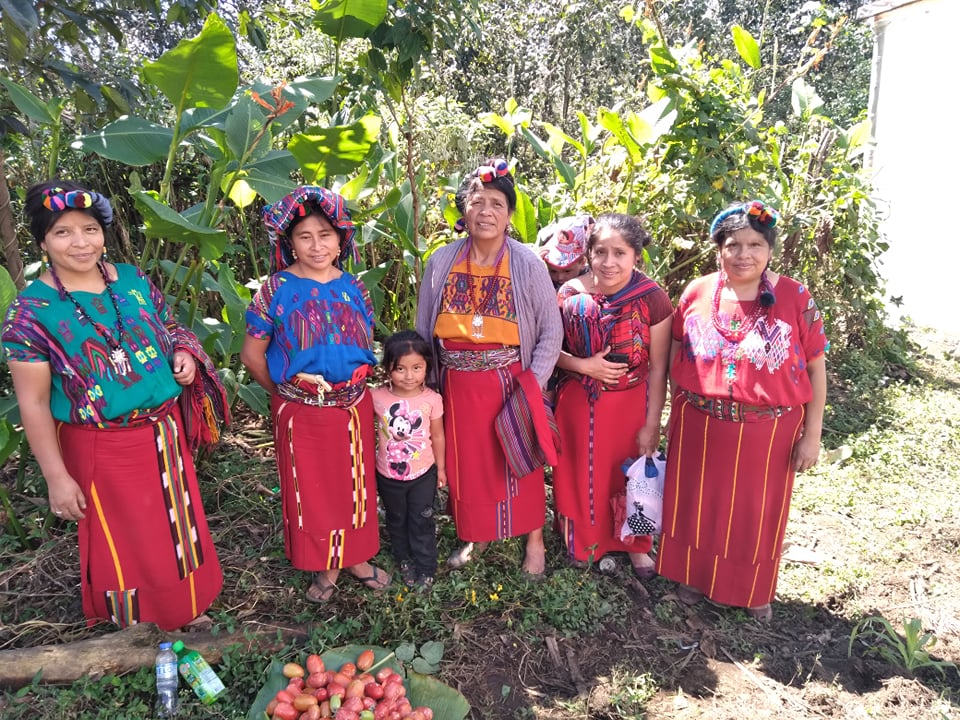 greenhouse tomato harvest and Junta Directive