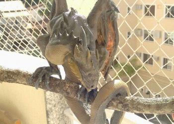 Angelus – O filhote de dragão