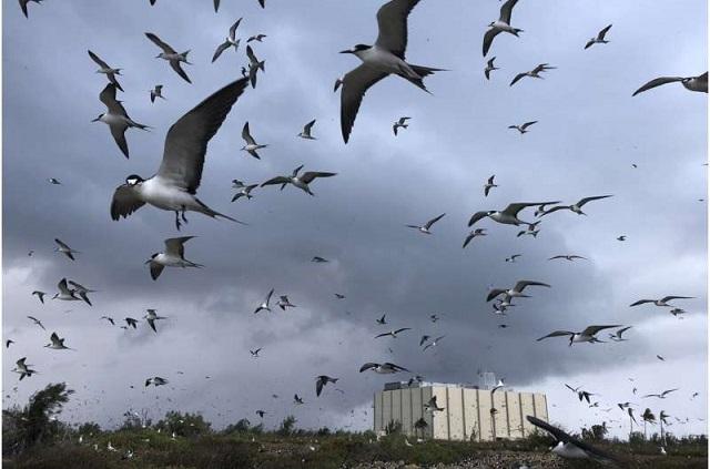 Atol Johnston, refúgio de aves marinhas