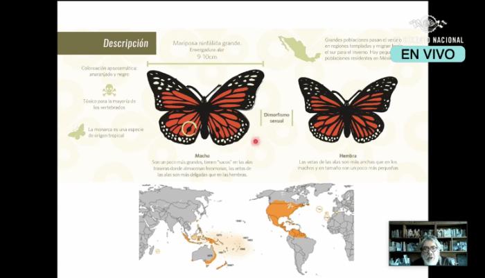 Características de la mariposa monarca