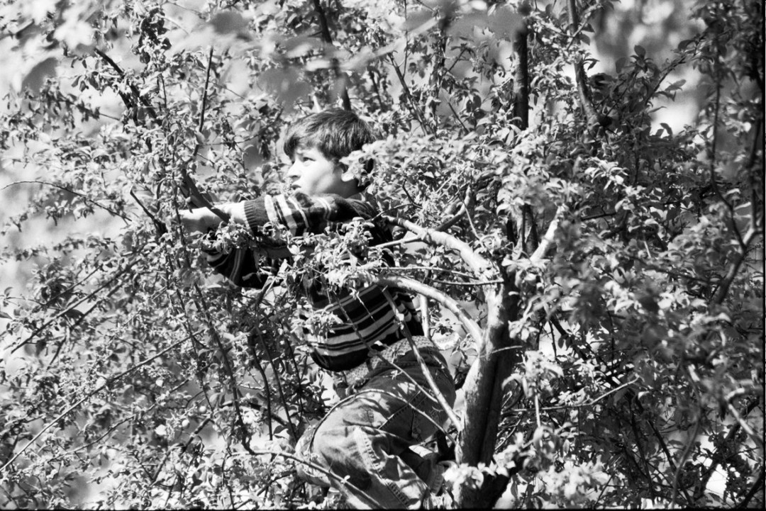 Niño en el árbol