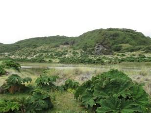 Su verde paisaje de fondo