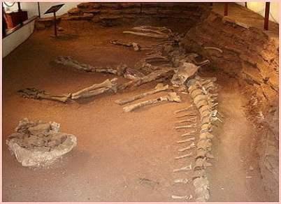 Foto 3: Esqueletos de dinosaurios