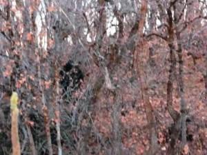 ¿Encuentro con el Pie Grande en Provo Canyon? – 04 de noviembre 2012