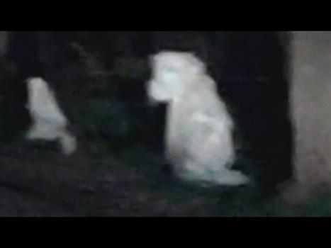 ¿Es ésta la primera foto de un extraterrestre del siglo 21?