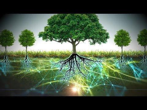 Científicos Revelan el Asombroso Mundo que Existe Debajo de los Árboles