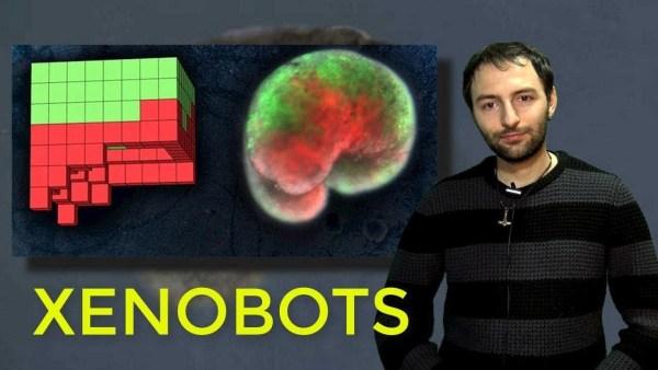 XENOBOTS, la nueva forma de vida que cambiará el mundo