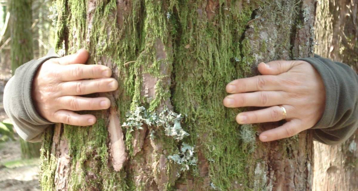 Abrazar árboles. Oficialmente avalado por la ciencia