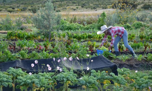 La ONU propone la agricultura orgánica como la mejor forma de alimentar al mundo