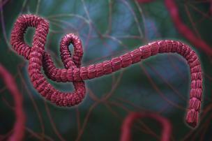 ebola 304xx1733-1155-0-289