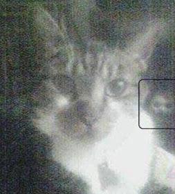 fantasma detras del gato - Apariciones y fantasmas captados con cámara ¿realidad o trucaje?