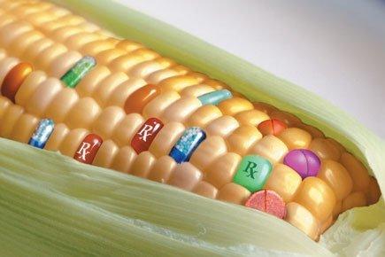 Resultado de imagen de semillas modificadas