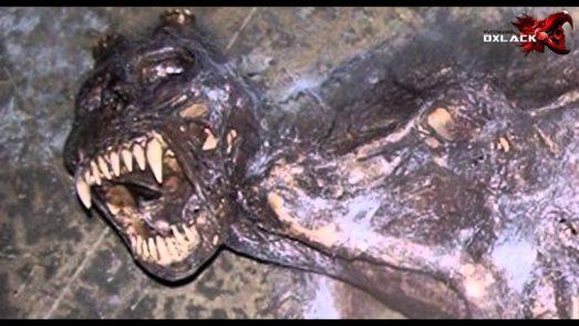 encuentran cadaver del chupacabras en campeche 1 - Encuentran Cadaver del Chupacabras en Campeche