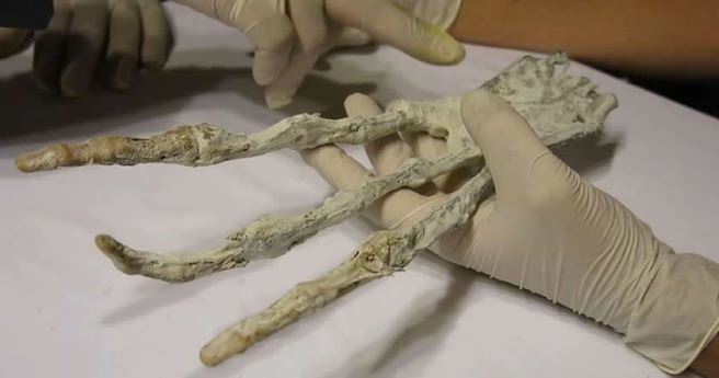 Misteriosa «mano extraterrestre» descubierta en Perú desconcierta a investigadores