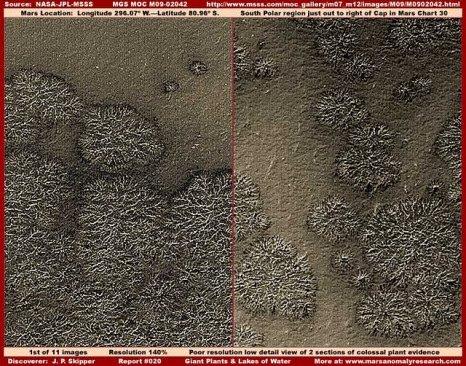 """01 020 colossal plants - Vegetación en: """"El polo sur de Marte""""."""