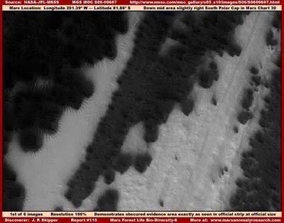 """1 115 official b2526w image - Vegetación en: """"El polo sur de Marte""""."""