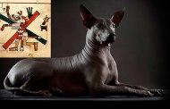 los Xoloitzcuintles, los perros aztecas que guiaban a sus dueños hasta el inframundo