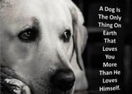 A-Dog- mundoretorcido.wordpress.com