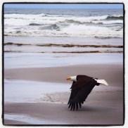 08 - eagle