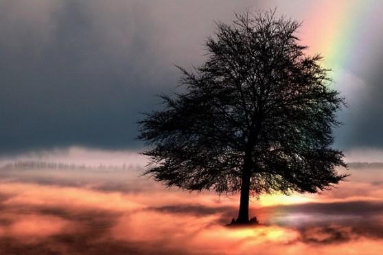 tree-2166193_640