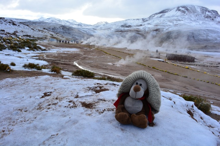 Mucuvinha na neve do Atacama