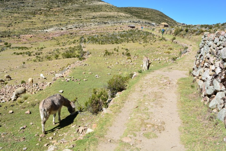 Caminho Inca que cruza toda a Isla del Sol