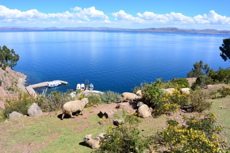 Ovelhas em Taquile